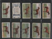 Tobacco cards cigarette cards Racehorses 1907 racing set